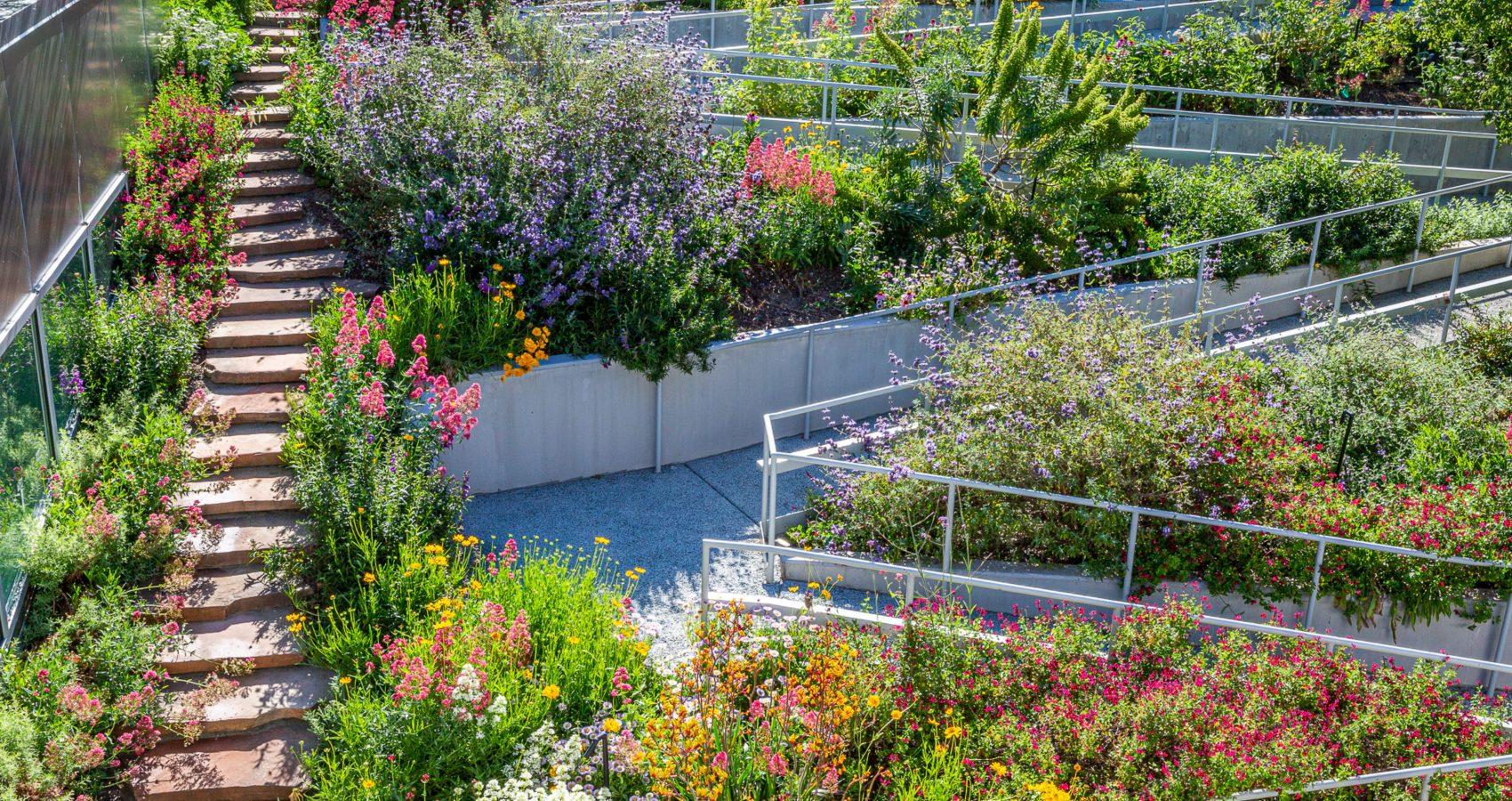 Native Plant Garden Design by Gothic Landscape