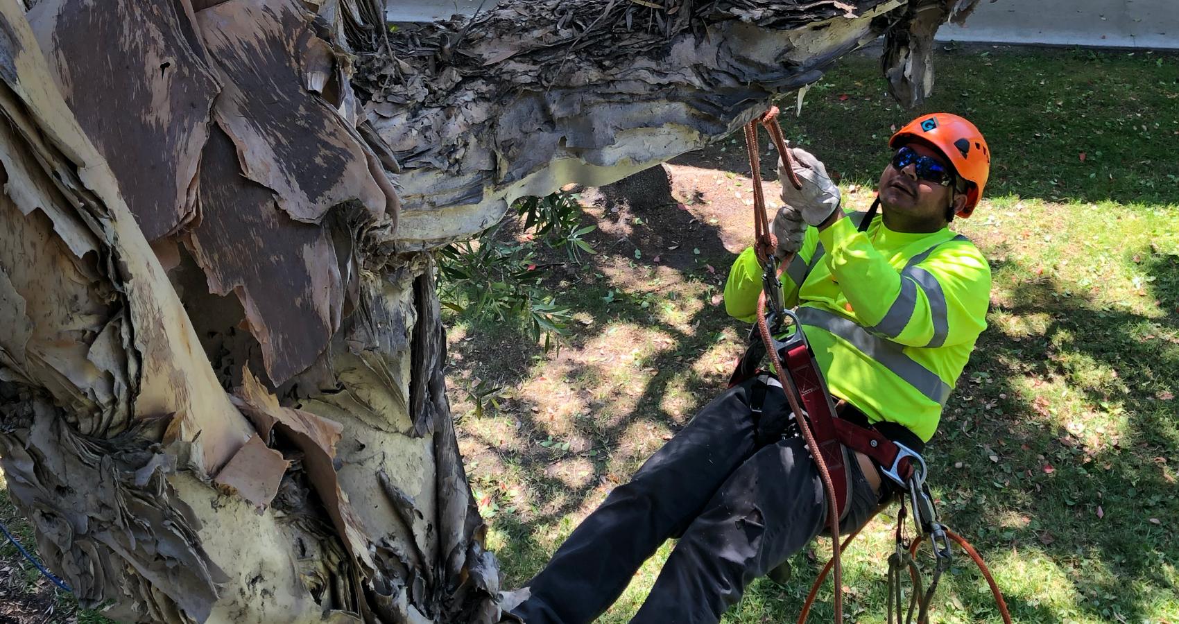 landscape emergency preparedness programs provided by Gothic Landscape