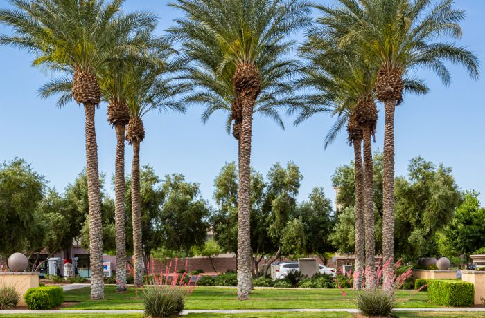 Nevada Landscape Design Services