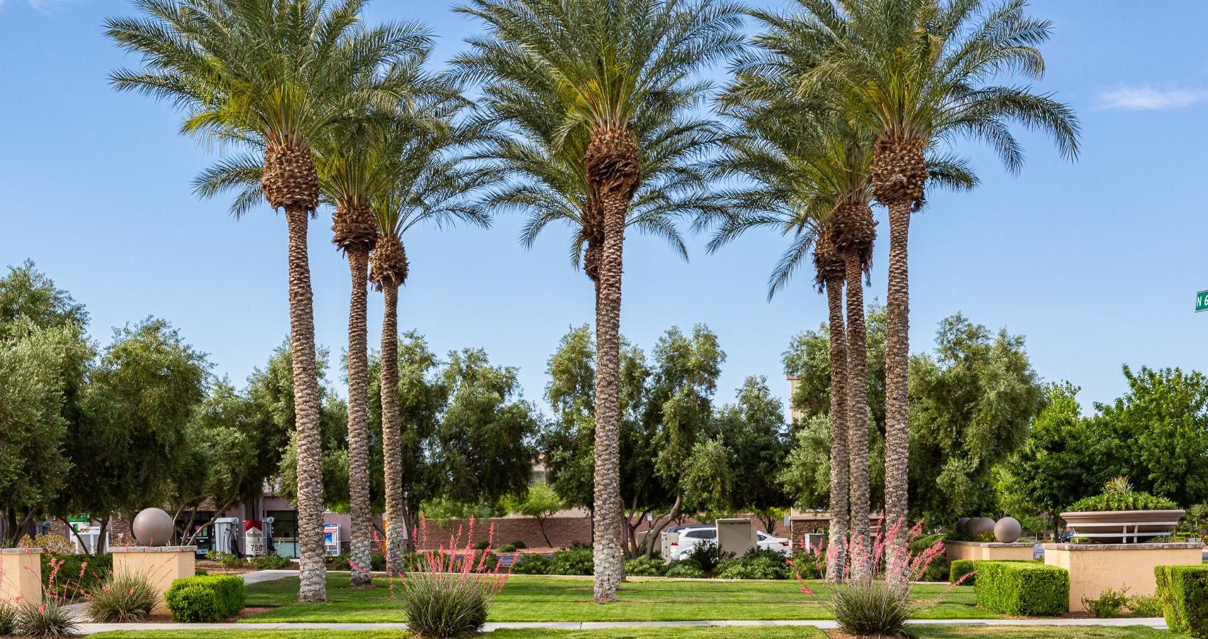 Nevada Landscape Design Services