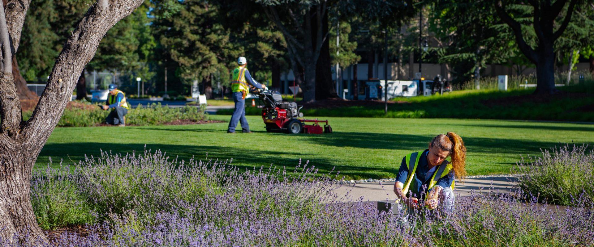 gothic landscape maintenance service